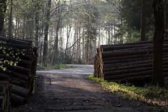 Logging (ramosblancor) Tags: naturaleza nature humanos humans tala madera logging wood apilada timberstack timber bosque forest badzwischenahn alemania germany viajar travel forestry aprovechamientosforestales