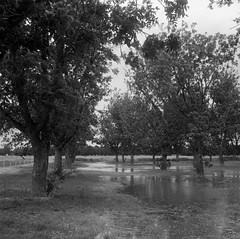 (Elizabeth Ann Aguilera) Tags: mamiya 6 mf 75mm arista edu ultra 400 medium format film self developed kodak d76 clint texas ramirez pecan farm