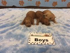 Shyanne Boys pic 4 6-2