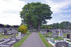 31787 (benbobjr) Tags: lincoln lincolnshire midlands eastmidlands england english uk unitedkingdom gb greatbritain britain british newport newportcemetery stnicholaschurchcemetery cemetery grave graveyard urban city gravestone