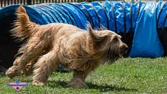 _DSC1257 (SeverX9) Tags: sony alpha 6500 70200gf4 dog run
