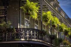1000 Royal St., New Orleans (Elliott Cowand) Tags: bostonferns wroughtiron wroughtironbalcony balcony nola neworleans 1000royalstneworleans elliottcowandyahoocom elliottcowand allrightsreserved copyright eos canon60d canon tamron thefrenchquarter thebigeasy thecrescentcity louisiana thevieuxcarre