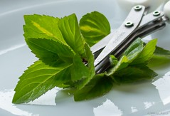 Small Herb Scissors and Ginger Mint. HMM! (Different Aspects) Tags: macromondays handtool herb scissors gingermint plant green
