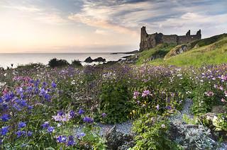 Dunure Castle | Flowers