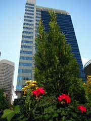 Happy Flower Thursday (Mr. Happy Face - Peace :)) Tags: calgary cowtown alberta canada highrise flower