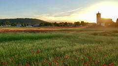 Sunset in Traspinedo (Rubén Ugalde) Tags: amapolas iglesia castilla campo atardecer traspinedo