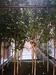 2018-06-FL-191949 (acme london) Tags: bondstreet botique courtyard interiordesign london retail shop silverbirchforest stellamccarney