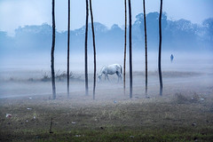A FOGGY MORNING (Arunabha Kundu) Tags: winter horse man people travel place india ngc morning