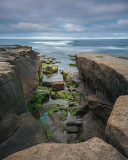 Coastal Moss