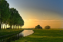 Western Glow (Alfred Grupstra) Tags: nature tree sunset landscape ruralscene outdoors summer grass sky sunlight scenics sun meadow sunrisedawn season beautyinnature tranquilscene agriculture water field