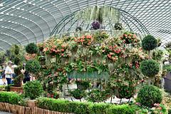 Begonia Brilliance (chooyutshing) Tags: begoniabrilliance floraldisplay flowerdome gardensbythebay baysouth marinabay singapore