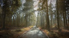 Foggy Forest (Marc Bremus) Tags: forest road trees nature tree autumn landscape path green woods wood fall fog way light park sun leaves foliage misty foggy mist pine country summer