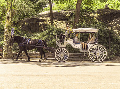 """Tourists Taking Horse and Carriage In Central Park (nrhodesphotos(the_eye_of_the_moment)) Tags: dsc012613001084 """"theeyeofthemoment21gmailcom"""" """"wwwflickrcomphotostheeyeofthemoment"""" centralpark spring 2018nycmanhattanpeoplehorse carriage tourists people road nature trees roadway outdoors"""
