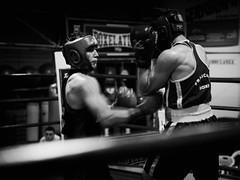 28675 - Uppercut (Diego Rosato) Tags: uppercut montante pugno punch incontro match ring boxe boxing pugilato boxelatina nikon d700 2470mm tamron bianconero blackwhite rawtherapee