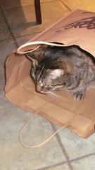 Cat in a bag (divnic) Tags: northernireland ballywalter countydown ards ardspeninsula ardspeninsular cat whiskey