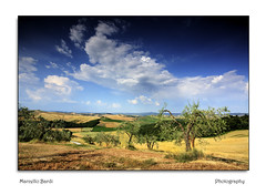 Crete Senesi (guitarmargy) Tags: tuscany landscape panorama paesaggio alberi prati cielo nuvole estate toscana marcellobardi italy coltivazioni ulivi natura terra sky clouds blue siena cretesenesi