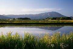 Paddy field (kat-taka) Tags: ã¬ãã mountain water paddy country blue iwate japan flower green glass