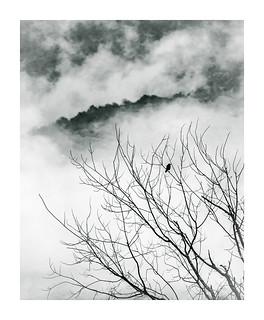 Vermont bird