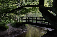 Bekkendelle (FreerkZ) Tags: bekkendelle woold achterhoek winterswijk gelderland slinge brug bovenslinge