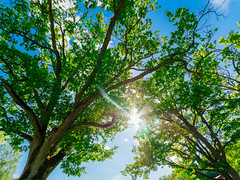 foliage (miemo) Tags: samyang75mmf35 em5mkii europe finland fisheye fiskars foliage nature olympus omd sky summer sunlight sunrays sunshine trees wideangle raasepori uusimaa fi