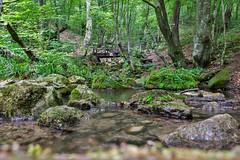 River Grza, Serbia (aleksa.ndar) Tags: grza lake serbia srbija landscape river colors nature nikon nikond5300