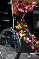 Flower power (Pico 69) Tags: blumen bunt fahrrad holland niederlande amsterdam pico69