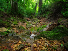Here, right here... (Mulewings~) Tags: woods thecreek deepdarkwoods trees stones rocks creekhike afterthestorm greens leaves dark colors breathing quotes nature