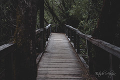 Parque Nacional Chiloé (Estudio Alegría) Tags: outdoors outside road chile d750 castro chiloé chonchi ancud nationalpark park photographer photography nikonphotography nikond750 nikon