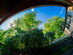 Fiskars (miemo) Tags: samyang75mmf35 courtyard em5mkii europe finland fisheye fiskars flowers innercourtyard olympus omd summer sunlight sunshine trees villa wideangle raseborg uusimaa fi