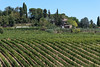 Vernaccia di San Gimignano - very young at the moment (Steve Barowik) Tags: san gimignano italy italia tuscany toscana nikond750 fx fullframe barowik stevebarowik sbofls26 holiday vacanza chianti vacation unlimitedphotos wonderfulworld quantumentanglement lovelycity nikkor countryside campania vines viniculture olivegrove view vista