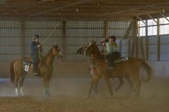 JBC_6573.jpg (Jim Babbage) Tags: krahc bethany appaloosa horses horseshow 2018