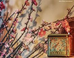 Blossoms (Retro Photo International) Tags: canon sl1 100d iscogottingen 50mm 28 cherry blossoms tin westanar
