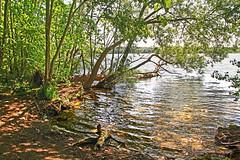 Forest lake in glittering sunshine (sunsju) Tags: outdoor landscape forest wood lake water tree sunlight