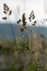 Transparency in grass