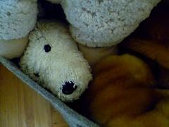 P1150557 (jhk&alk) Tags: toydog snowy milou