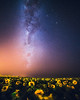 Dream (Valter Patrial) Tags: milkyway sunflowers lights night milky way landscape breath taking landscapes astrofotografie astro photography shots earth stars céu árvore flower