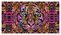 Tigris Coleum (Swissrock-II) Tags: challenge tiger tigris photoshop photomanipulation photoart fotokunst art kunst digitalart brushes overleigh mix frame pixlr 2018 june andykobel