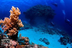 Precontinent II - Jacques Cousteau (ShaunMYeo) Tags: sudan underwaterphotography scubadiving ikelite