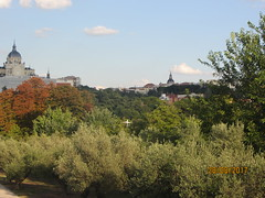 View from the lookout. Olive trees in foregroundand in the background,  Madrid skyline (d.kevan) Tags: madridrio madrid parksandgardens views trees foliage almudenacathedral churches buildings domes archtitecturaldetails spain museums royalcollectionsmuseum sanfranciscoelgrande