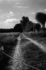 270518-2 (salparadise666) Tags: kw patent etui 9x12 fomapan 200125 polfilter caffenol cl semistand 40min nils volkmer large format view camera bw black white monochrome film analogue hannover region niedersachsen north german lowlands nature landscape vertical