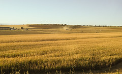 Men at work (Marian Pollock) Tags: spain fields avilia harvest machines farms dry yellow wheat