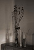 _DSC1612L (Pascal Rey Photographies) Tags: stilllife naturemorte deadflowers poppies bamboo bambou irvingpenn hommages flou blur sepia brown pascalrey photographiecontemporaine photos photographie photography photograffik photographiedigitale photographienumérique photographierurale pascalreyphotographies nikon d700 luminar2018