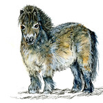 Postcards for the Lunch Bag - Miniature Horse thumbnail