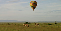 Hot-Air-Ballooning-Safaris-in-Uganda (Roots Uganda tours and Travel) Tags: ugandasafari ugandasafaris ugandagorillasafaris gorillatrekkingsafarisinuganda gorillasafarisuganda ugandagorillasafarisandtours wildlifesafarisinuganda wildlifesafariinuganda safarisinuganda ugandatours ugandatoursandsafaris carhireservicesinuganda rentasafaricarinuganda ugandasafaritours gorillasafarisinuganda rwandasafari gorillatrekking ugandagorillatrekkingtour gorillasafariuganda rwandagorillasafari rwandagorillatrekkingsafaris rwandasafaris uganda gorillas wildlife africa africawildlife pearlofafrica wakanda kampala travel tour touruganda tourcompaniesinuganda tourcompanyinuganda travelagenciesinuganda traveluganda gorillatour wildlifeinuganda wildifeinrwanda touristattractionsinuganda africansafaris adventuretoursinuganda ugandabudgettours budgettours luxurytours ugandahoneymoon africanbudgetsafaris africabudgettours wildlifedestinationsinafrica wildlifeinafrica queenelizabethnationalpark bwindiimpenetrebleforestnationalpark murchisonfallsnationalpark kidepovalleynationalpark birds birdwatchingtours birdingtours birdingsafaris budgettrips nature tours
