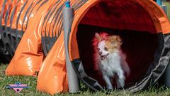 _DSC0699 (SeverX9) Tags: sony alpha 6500 70200gf4 dog run