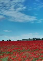 Campo de amapolas (Carlos Javier Pérez) Tags: amapola amapolas campodeamapolas poppy poppies cielo nubes azul rojo largaexposicióndiurna led filtrolee bigstopper