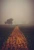 A Path Well Trodden (ianbrodie1) Tags: field farmer crops consett fog eerie kiln pitt hill