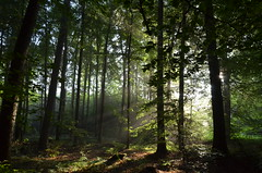 DSC_3116 Stille... wenn der Wald noch schläft - Silence ... when the forest is still asleep (baerli08ww) Tags: deutschland germany rheinlandpfalz rhinelandpalatinate westerwald westerforest