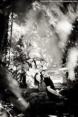 Phu Ping Palace Chiang Mai Thailand Wedding Photography (NET-Photography | Thailand Photographer) Tags: 200 2013 85mm 85mmf14 phupingpalace camera chiangmai couple d3s engagement engagementsession f14 iso iso200 love nature netphotographer netphotography nikon outdoor palace prewedding prenup prenuptial th tha thailand พระตำหนักภูพิงคราชนิเวศน์ photographer photography professional service wedding documentary honeymoon session best postwedding asia asian destination popular thai local