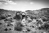 Ivanpah Road, Mojave National Preserve, California (paccode) Tags: solemn mojave landscape desert bushes blackwhite hills california abandoned monochrome nationalpark dump cactus creepy d850 forgotten truck quiet unitedstates us